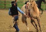 Come comunicare con i cavalli