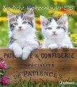 Calendario Cute Cats 2018