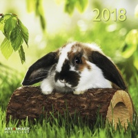 Calendario Rabbits 2018 TeNeues