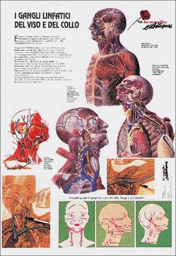 poster I Gangli Linfatici del viso e del collo