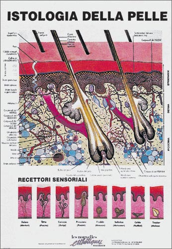 poster Istilogia della Pelle
