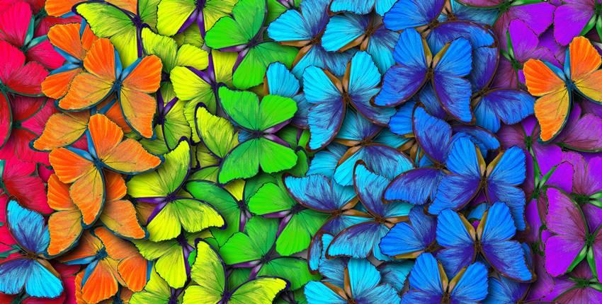 intelligenza-dei-colori-libro.jpg