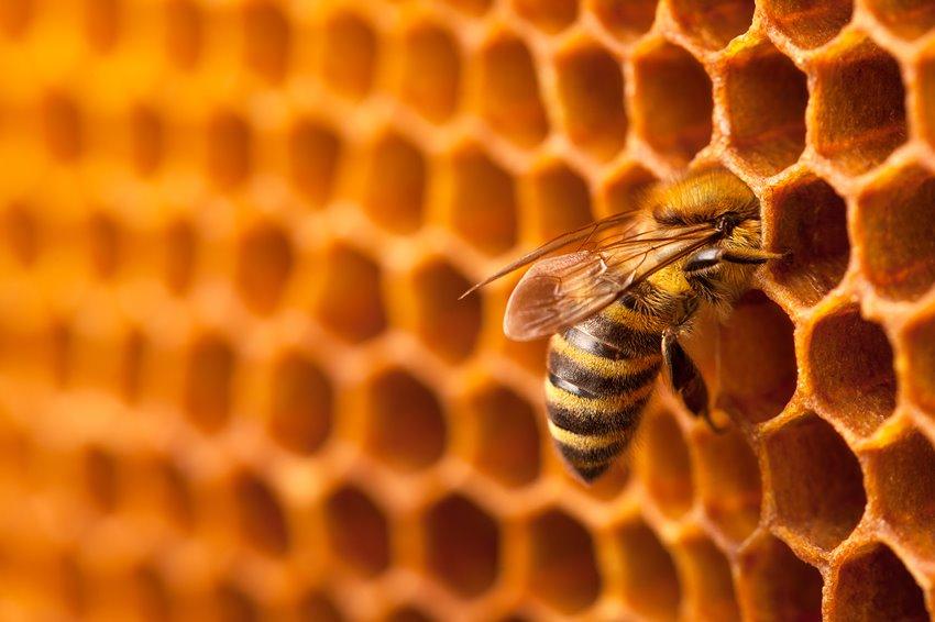 nido-api