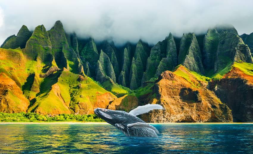 spirito-aloha
