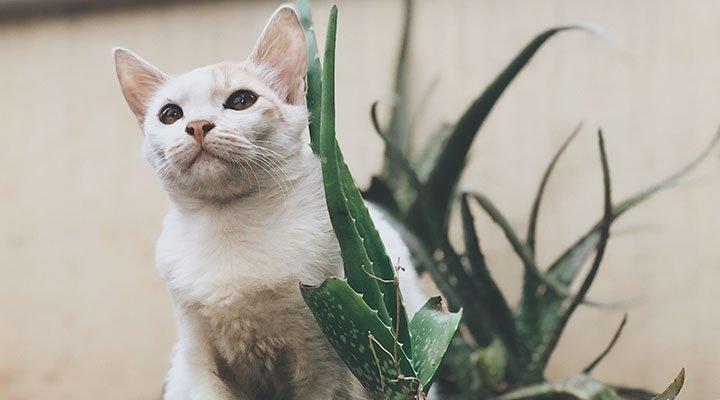 alore-vera-animale-cane-gatto-salute